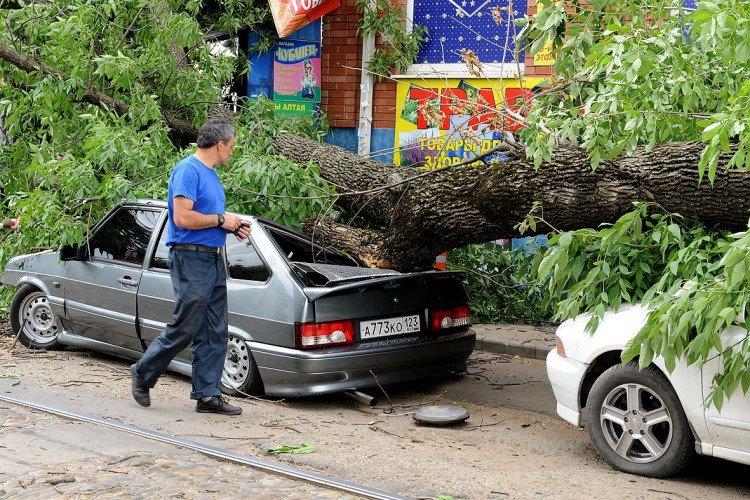 Что делать, когда на машину упало дерево?
