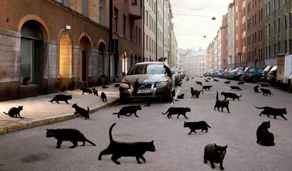 Водители боятся, когда дорогу переходит черный кот