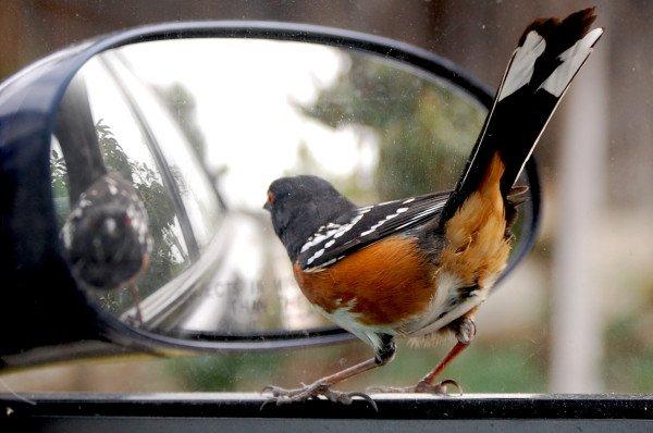 Как настроить зеркала автомобиля