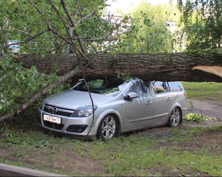 На фото - дерево упало на авто
